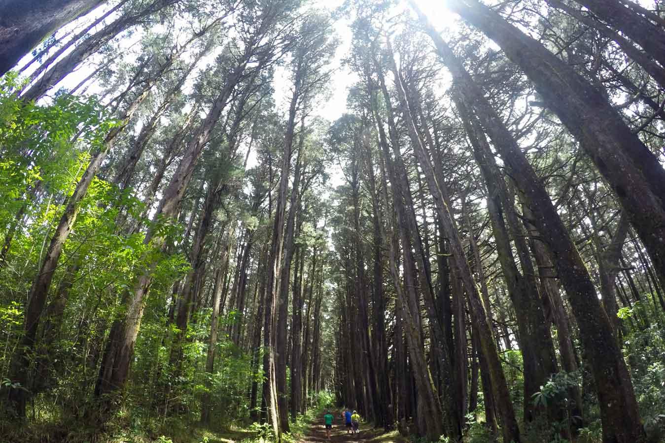 「bosque de la hoja」の画像検索結果