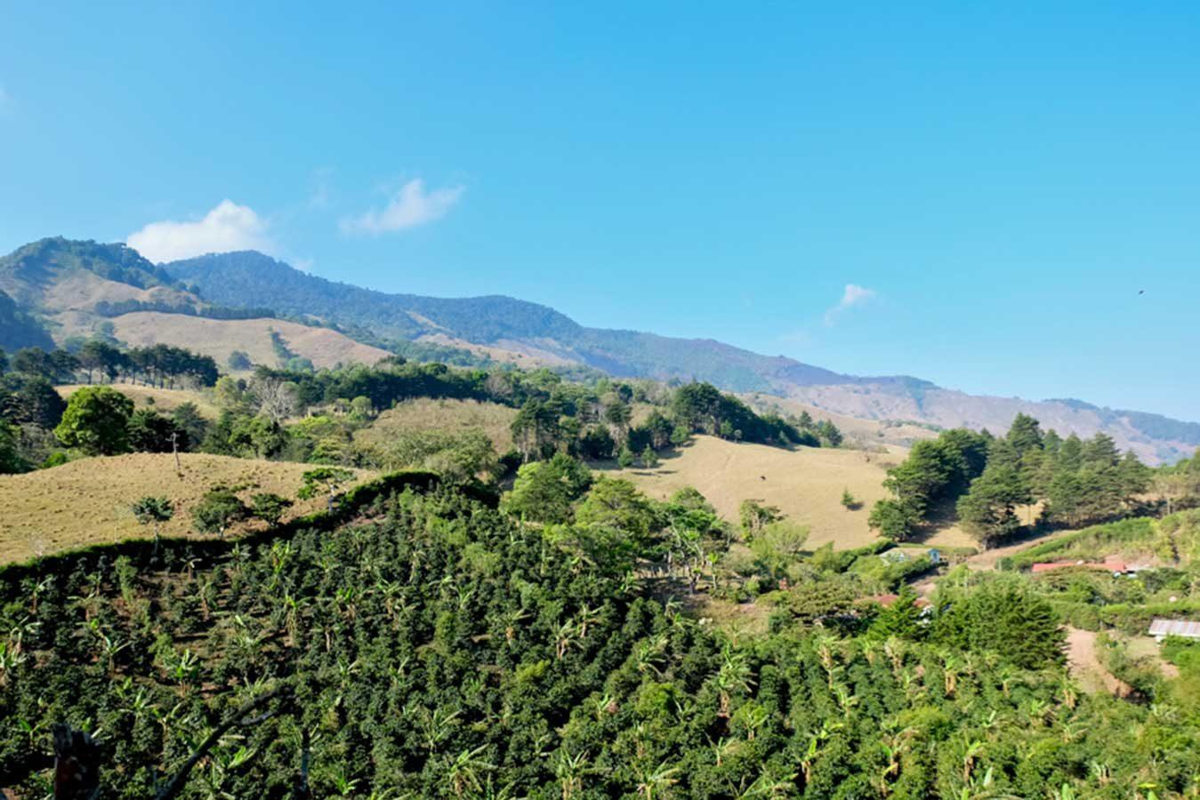 Cerro-Dragon